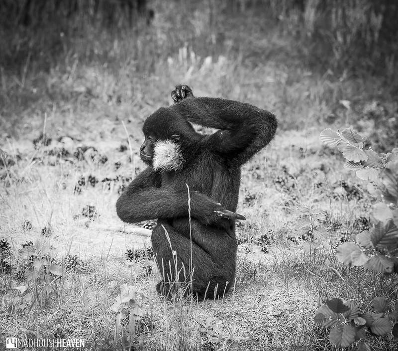Safaripark Beekse Bergen - 0340