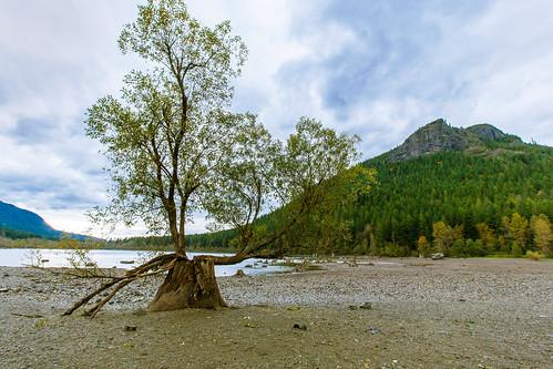 tree stumps rattlesnakelake rattlesnakeledges