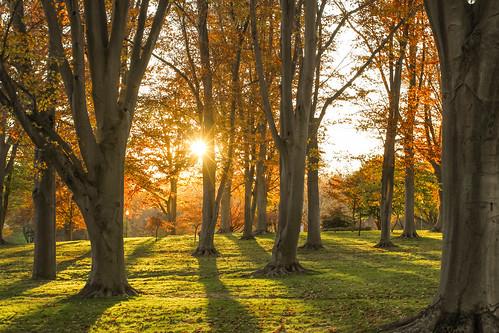 autumn light sunset sun fall colors grass unitedstates kentucky fallcolors louisville rays sunsetlight beachtrees