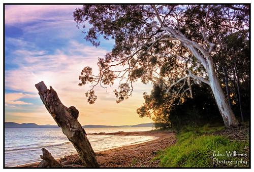 sunrise gum dawn waterfront border australia photoborder