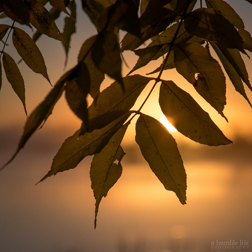 morning autumn sun lake canada reflection tree silhouette sunrise golden leaf nikon regina saskatchewan d800 wascana