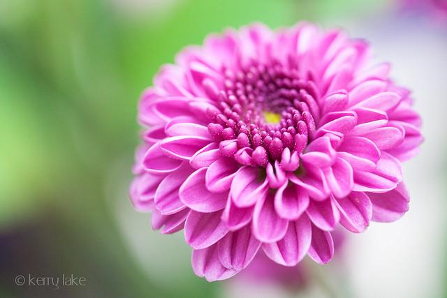 flower macro-1301