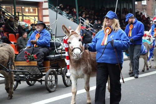 The Donkey Breed Society - LNYDP 2015