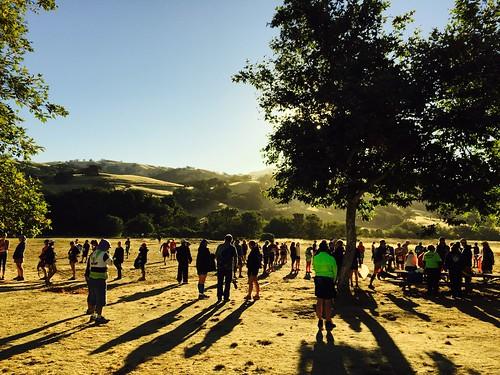 morning plant tree sunrise outdoor running halfmarathon trailrun trailhog