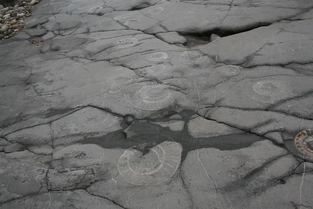 Fossil near Culverhole Point