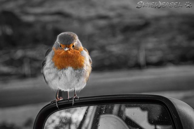 Winged Mirror