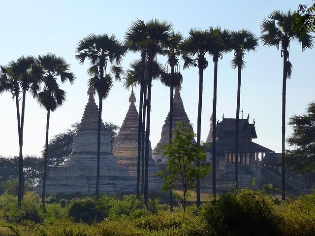 white stupas & sugar palms, Bagan