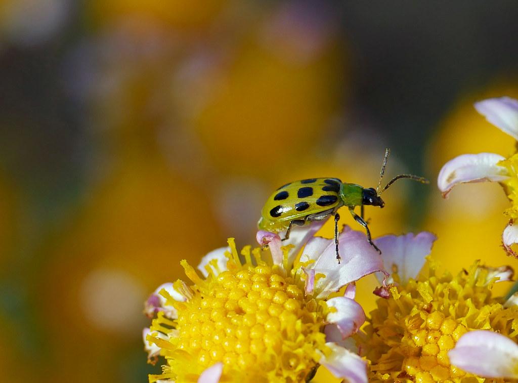 bug on bokeh