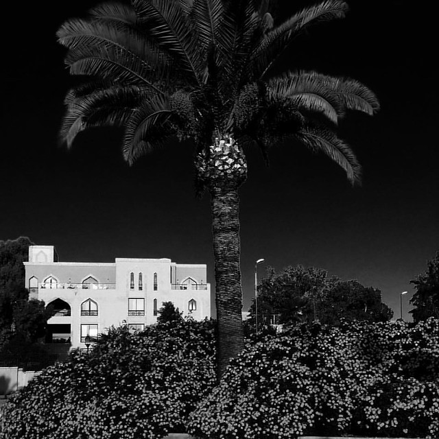 Dream black and white