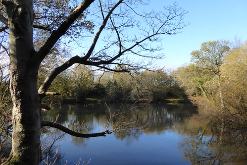 Pond near Stanmore   by Bods