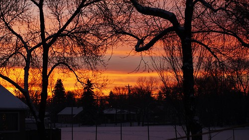 sunrise tree trees light clouds edmonton alberta canada