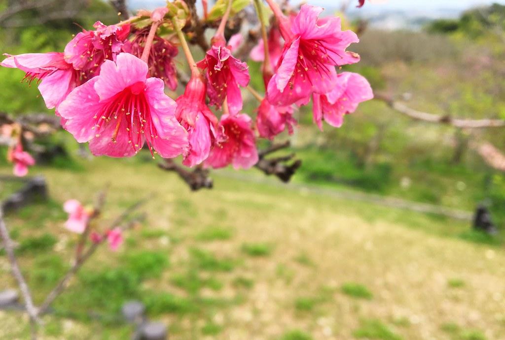 yaese park. okinawa