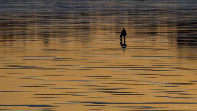 Pilkkimistä auringonlaskun aikaan - Ice fishing in the twilight time