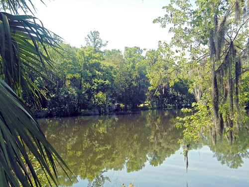 trees lake water landscape pond scenery florida dunnellon