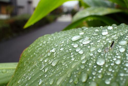 Raindrop   by mrhayata
