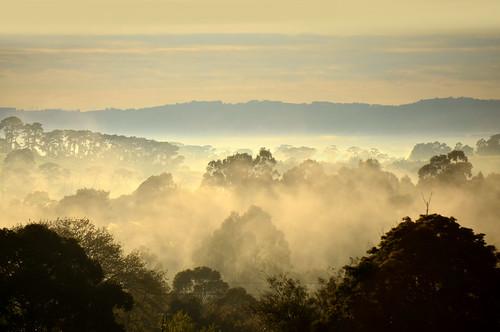 morning cloud mist weather misty fog clouds sunrise landscape dawn nikon foggy australia victoria vic bonavista gippsland warragul westgippsland d5100 nikond5100 phunnyfotos warragulsouth