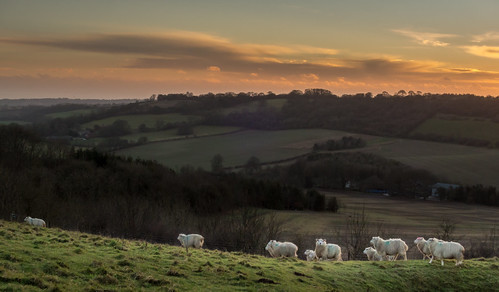 uk greatbritain sunset england animal animals landscape mammal europe sheep unitedkingdom farm gb berkshire combe fav10 fav25 combegibbet canons120