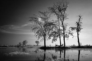 10 Tree lake front processed BW FUJI | by Matt Jones (Krasang)