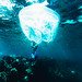 Jellyfish man by Davide Albani