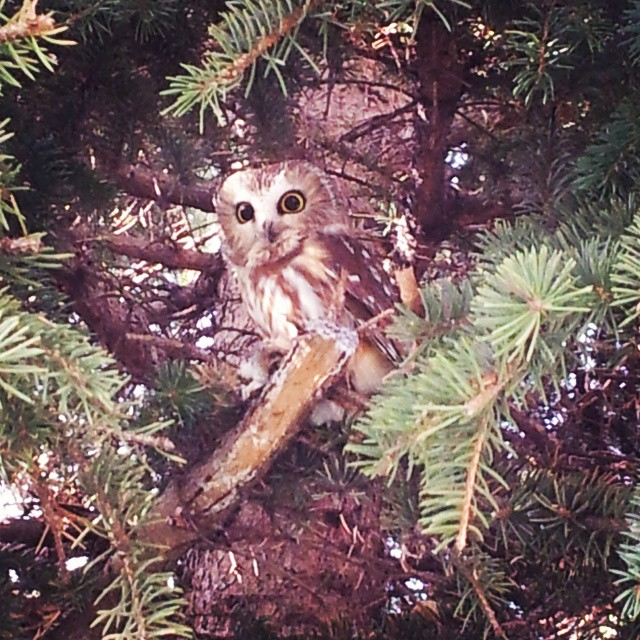 Look HOoO was in our playground this morning!