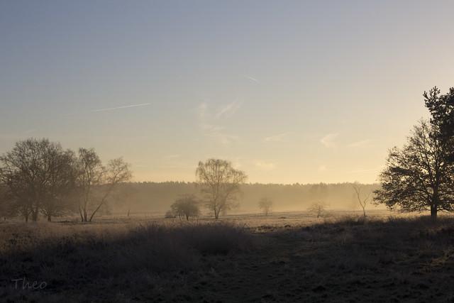 vorst en nevel / icy morning