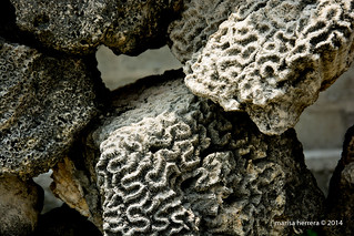 Neduntivu. Tapias hechas de coral. Wall of coral stone.