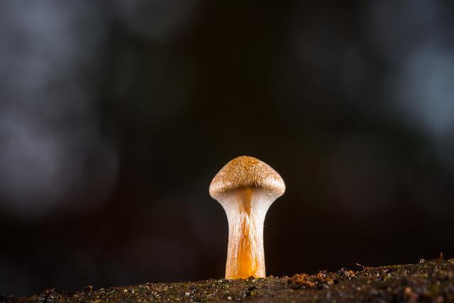A real small one - Un vrai petit champignon