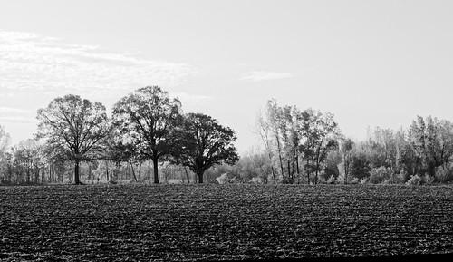 blackandwhite bw tree monochrome nikon michigan fields 2012 d300 barrycounty nikond300