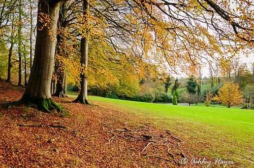 tree landscape unitedkingdom cullybackey autumnleaves northernireland countyantrim galgormmanor