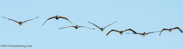 Brown Pelican Squadron - Gulf Shores, AL