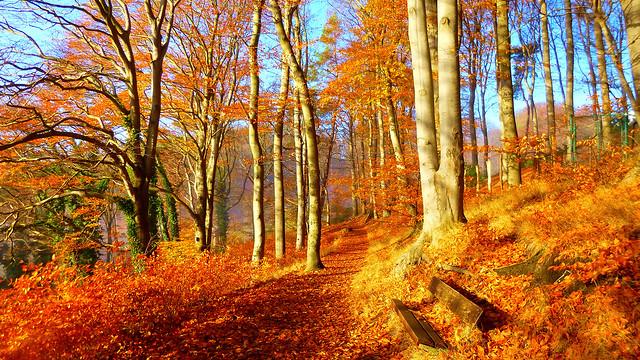 Colorful Autumn Wallpaper 🍂🍁