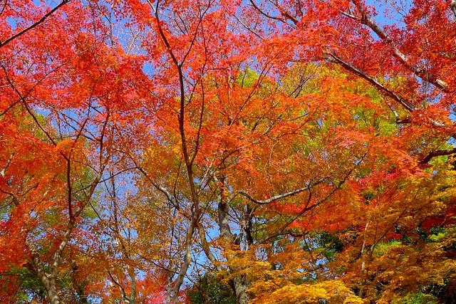 autumn:秋天