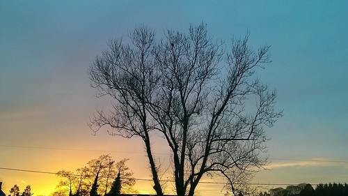 november light sunset sky tree nature wales clouds ceredigion 930 lampeter lumia pureview lumia930