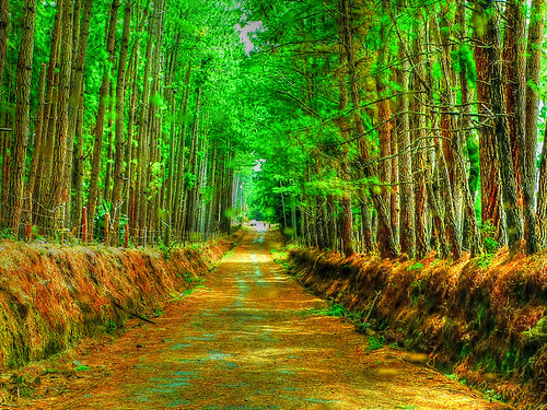 road trees green nature rural landscape countryside natural country dirt boquete panama pinetrees hdr chiriqui