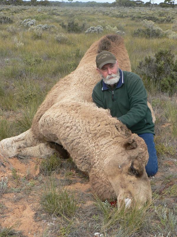 camel hunting australia ile ilgili görsel sonucu
