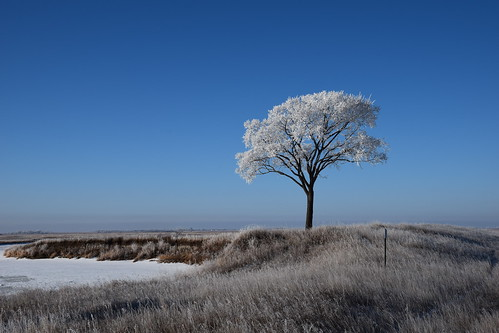 Morning Frost | by USFWS Mountain Prairie