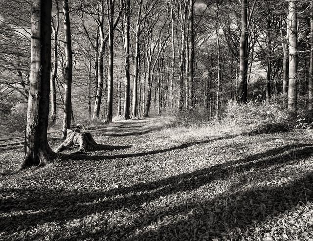 _B229746 Ochsenheide Wald