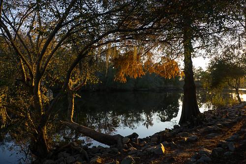 trees reflection river landscape fallcolors gh2 conwaysc waccamawriver 14140mm panasoniclumixgh2 conwayriverwalk