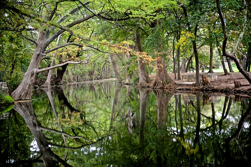trees nature water creek reflections landscape texas cypress wimberley waterscape