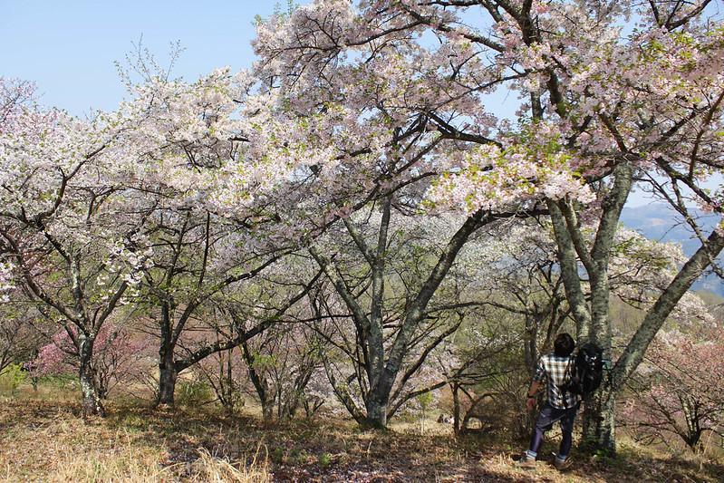 2014-04-19_00238_美の山.jpg