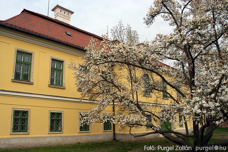 Virágzik a Magnólia a kastély előtt