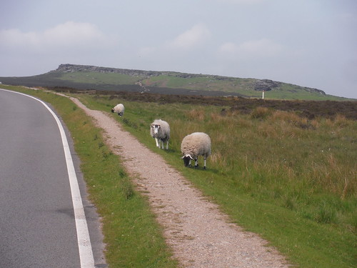 Stanage Edge South and Sheep, from Upper Burbage Bridge SWC Walk 266 - Sheffield to Bamford (via Burbage Rocks and Stanage Edge) or to Moscar Lodge