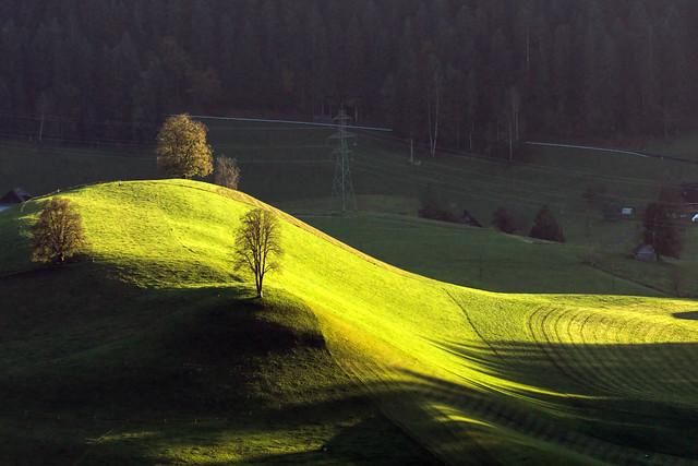 Three Trees in the Sun