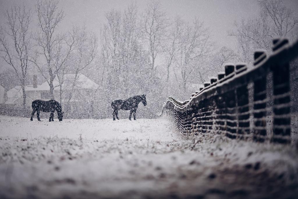 Snowy lines