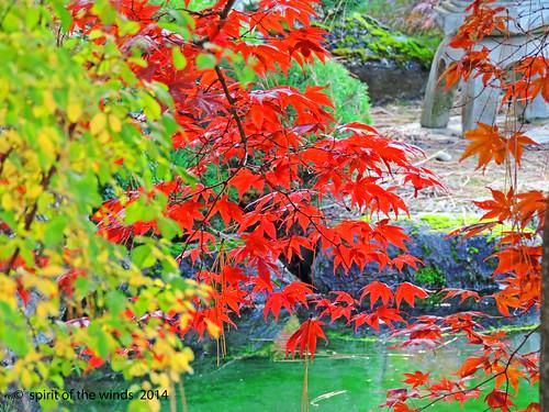 autumn fall nikonflickraward spokanewashingtonstate