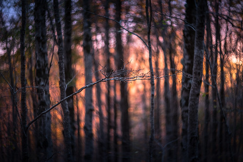 autumn trees sunset cold colors warm tramonto bokeh monte swirly helios402 autore montisimbruini canon6d