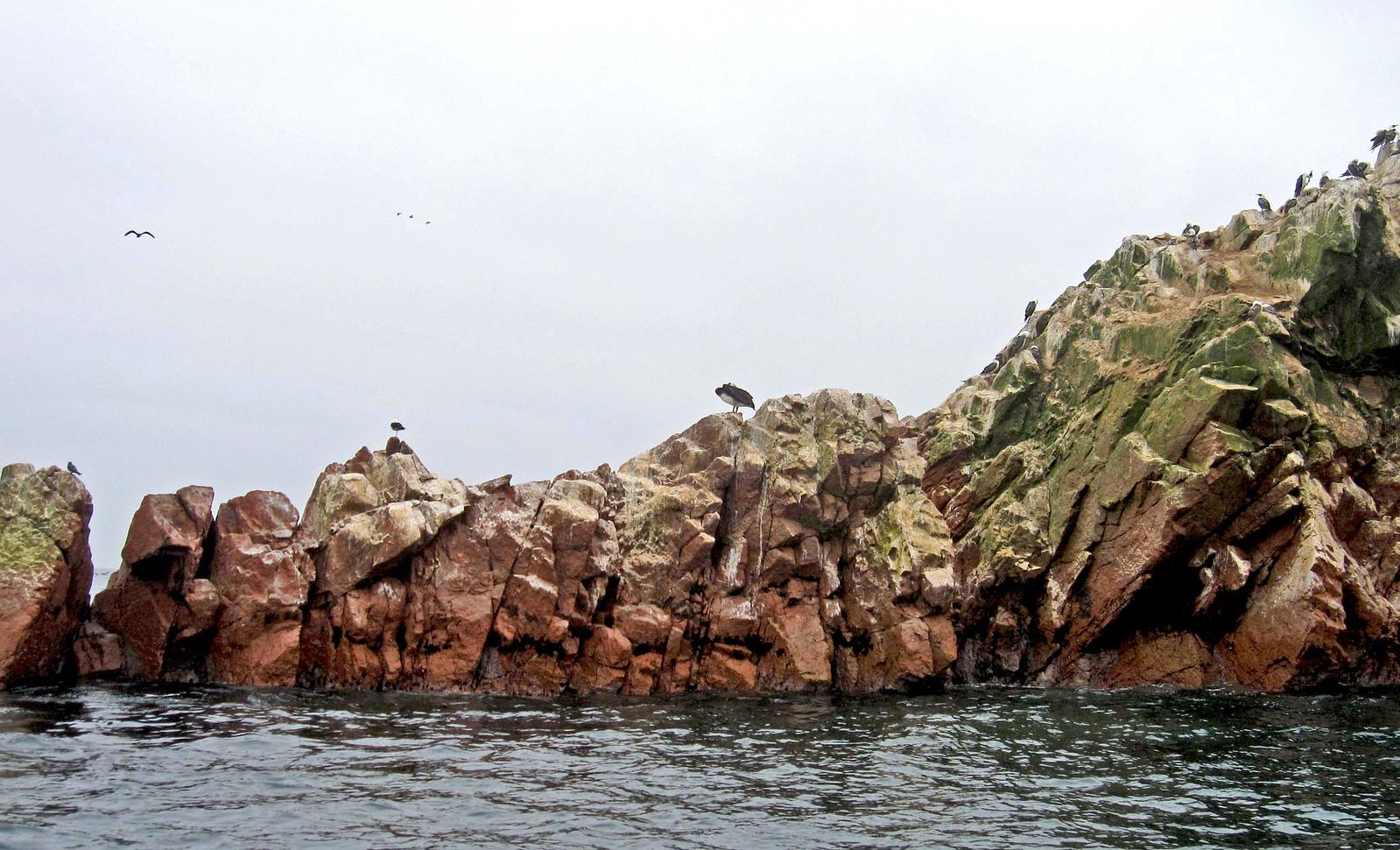 Islas Ballestas 88
