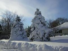 2010 Snowstorm!