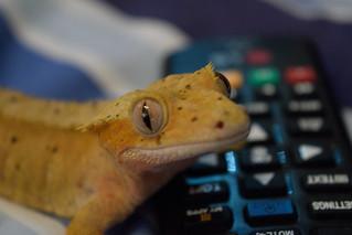 Nacho with remote control | by StuartHFulcher