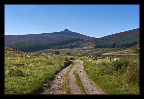 woodland aberdeenshire sheep path hill clachnaben glendye